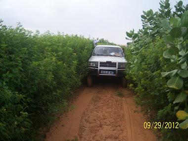 صورة من طريق غير معبد
