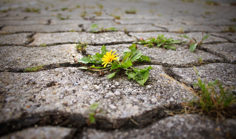pilgrim's progress essay topics