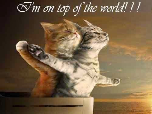 Titanic kittens and Cats Love quotes