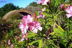 Aldefa - Planta Venenosa
