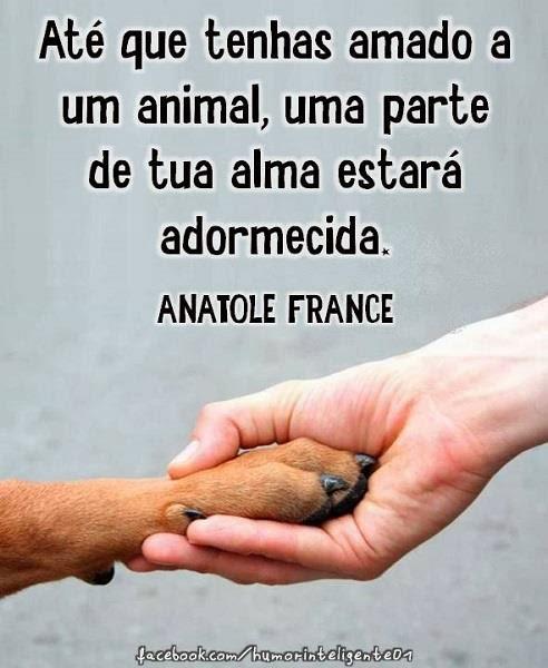 ABANDONO DE ANIMAL É CRIME
