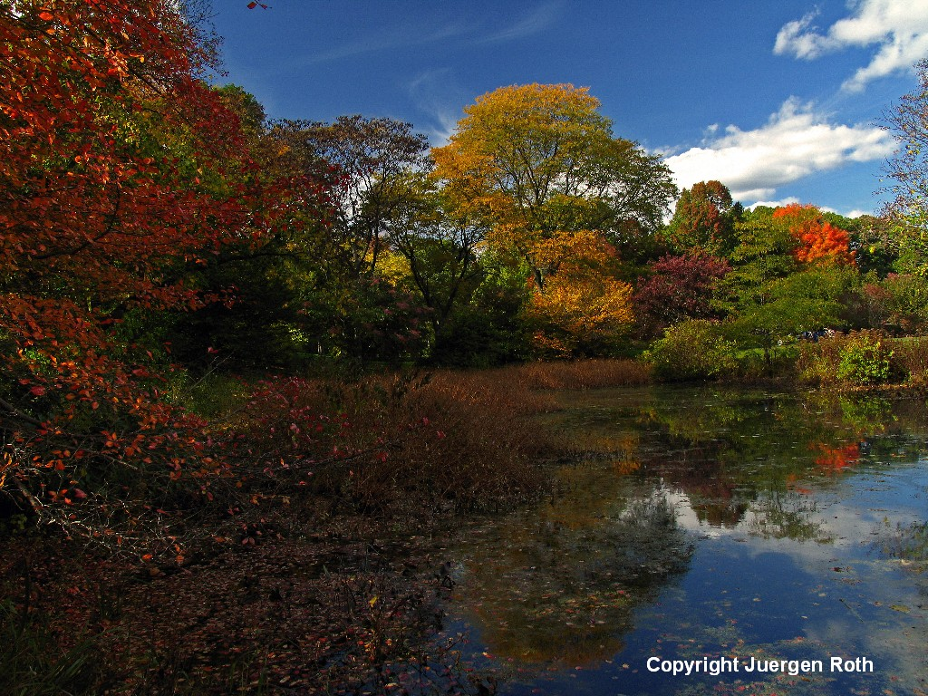 http://juergen-roth.artistwebsites.com/featured/ne-fall-foliage-juergen-roth.html