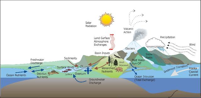 Contoh Ekosistem Alami dan Buatan