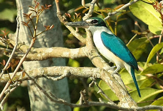 Beautiful birds seen from Sudhanyakhali Watch Tower, Sundarban