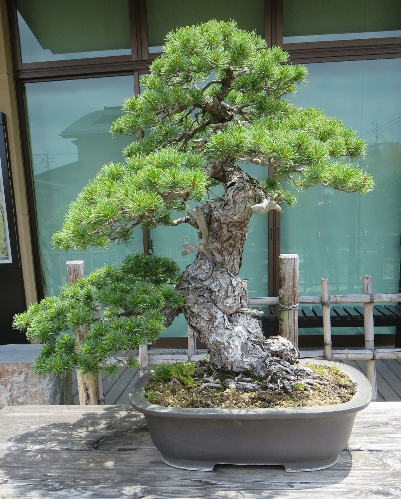 Akron Canton Bonsai Society A Pilgrimage To The Bonsai Village Of