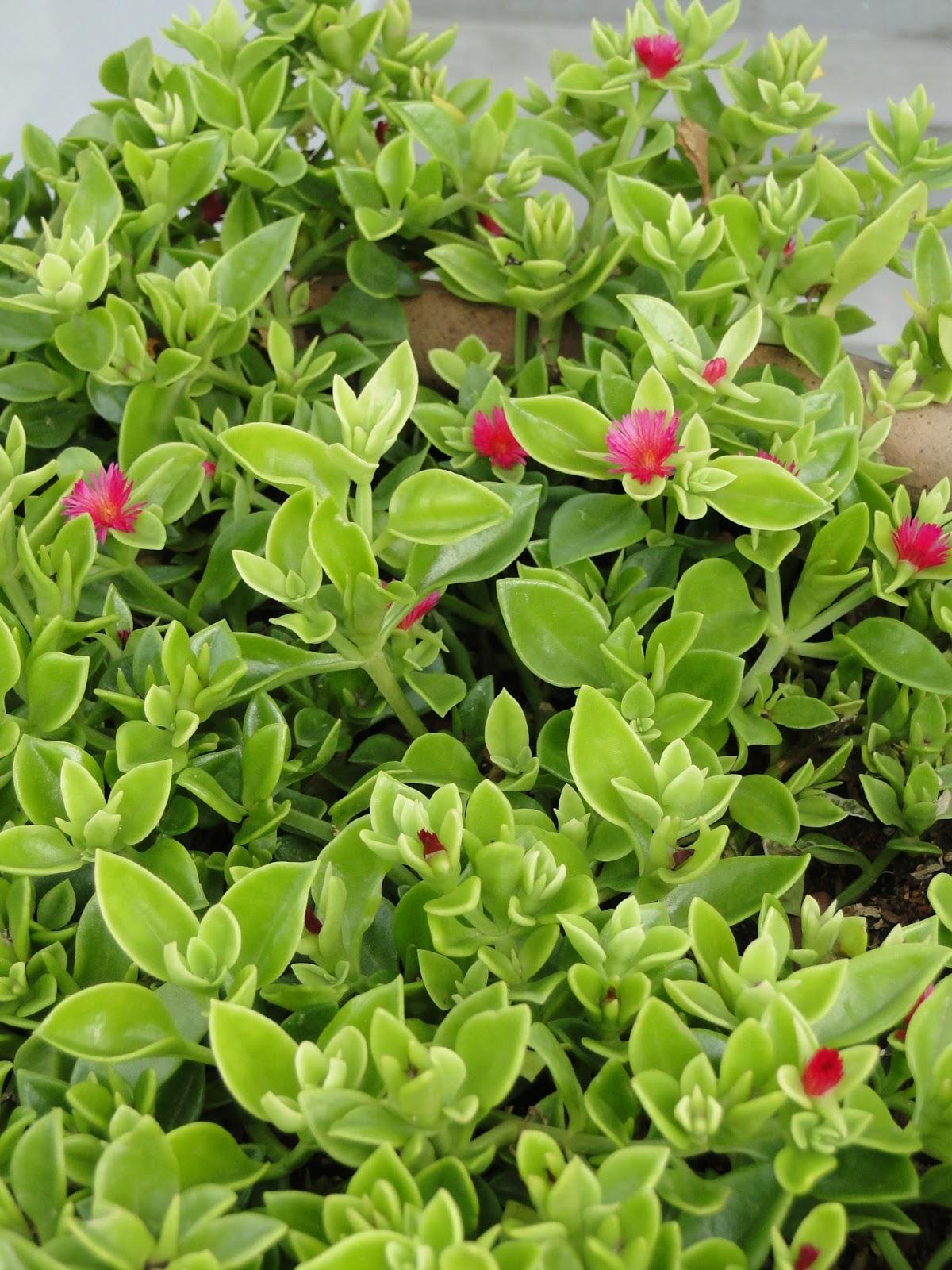 Ateli milla artes dicas plantas resistentes ao sol - Plantas pleno sol ...