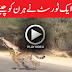 Intelligent deer saved by Tourists