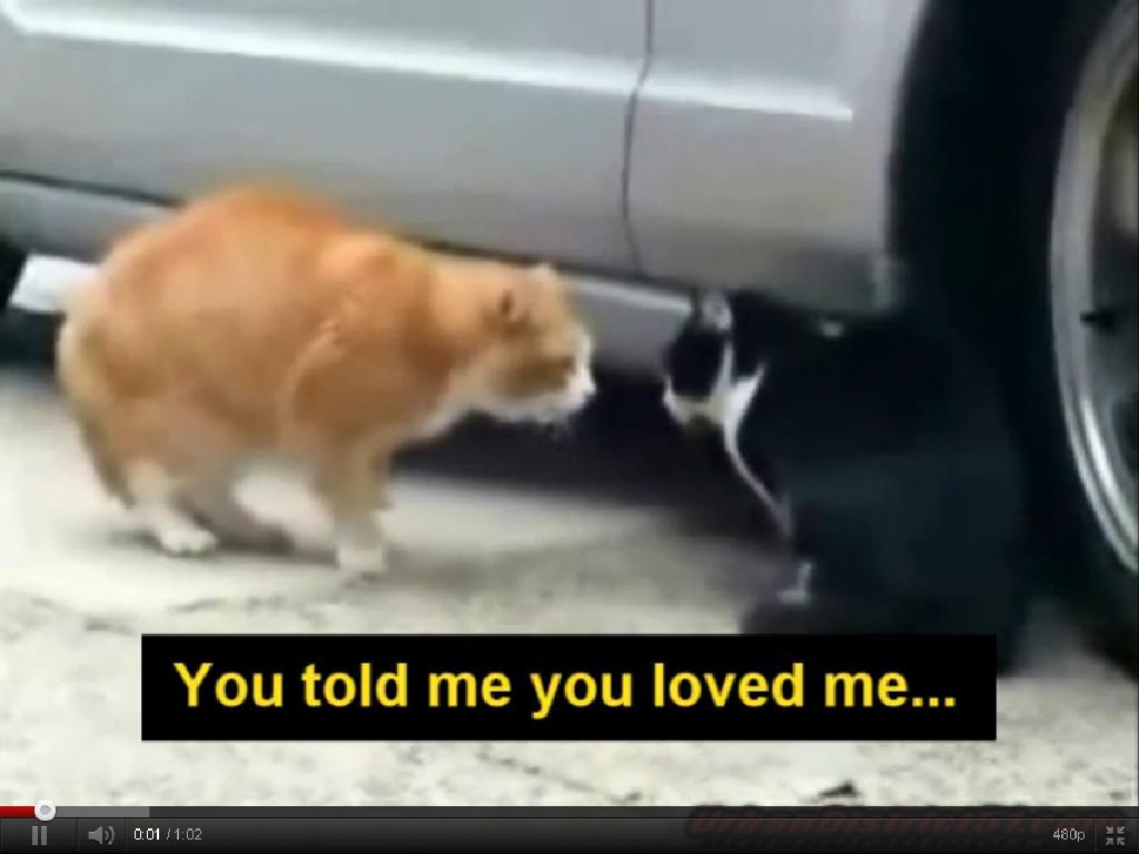 ... Funny Animals - Cats Fighting (The First Video With Original Captions