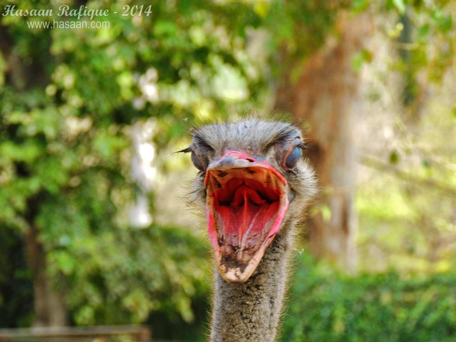 An ostrich captured in a quick fleeting moment.