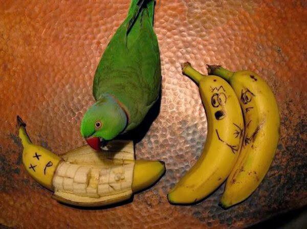 Funny animals of the week - 3 January 2014 (40 pics), bird eats banana
