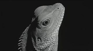 Sogo Ishii electric dragon