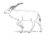 Antelope Printable Kids Coloring Pages
