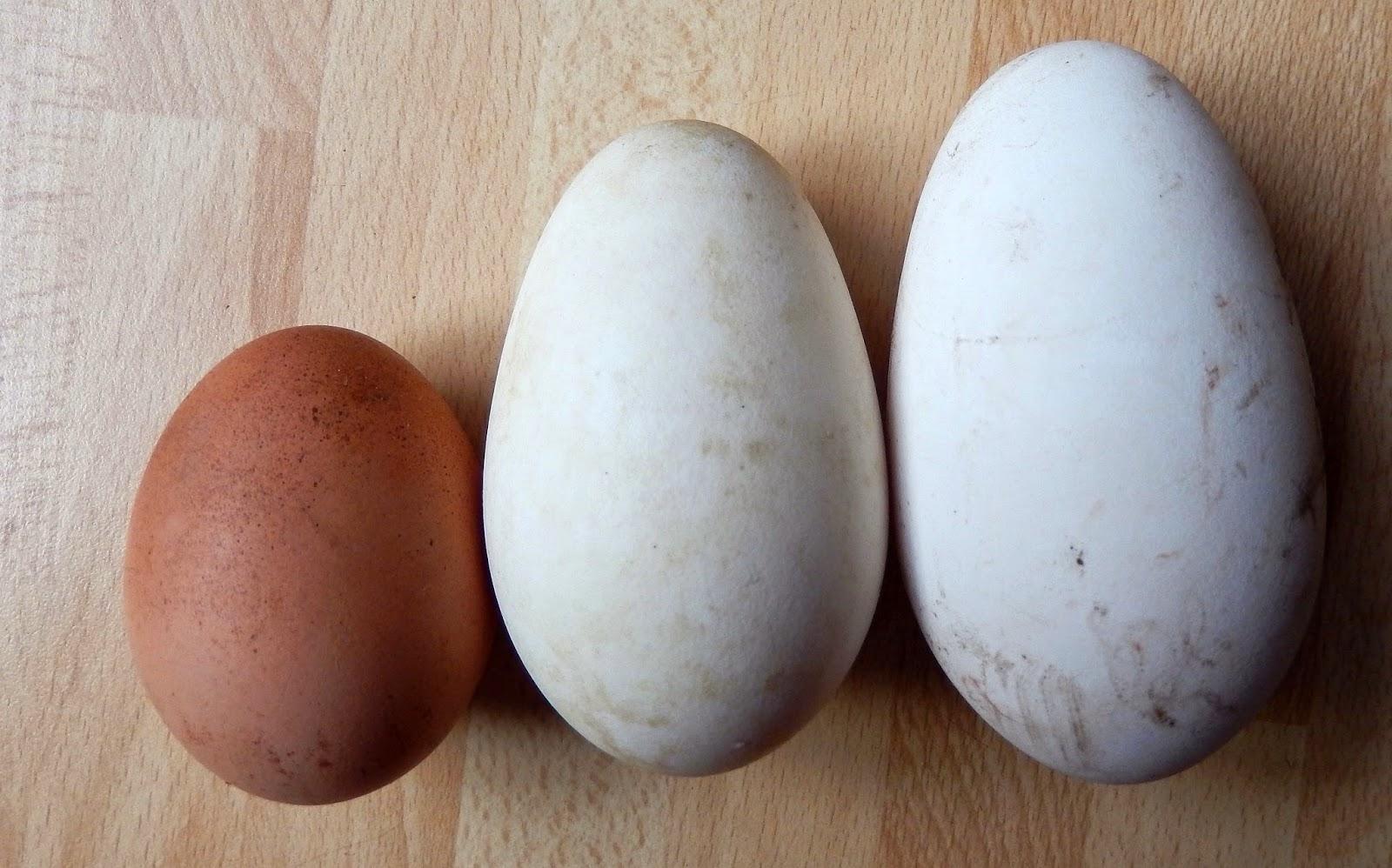elke dag 2 eieren eten
