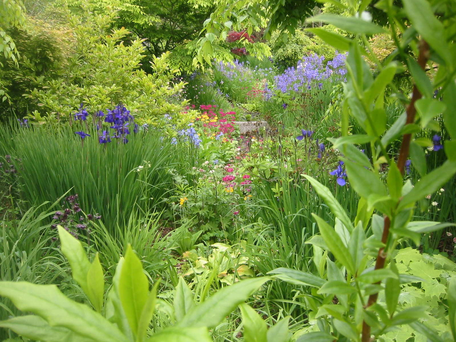 Gardening tips and good plants beautiful garden - Tips for a lovely garden ...