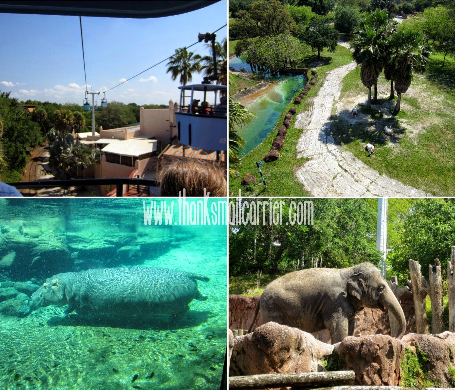 Busch Gardnes animals