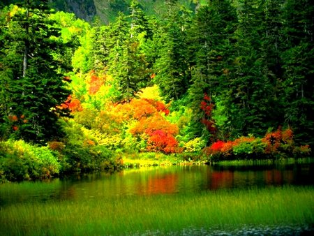 nature wallpaper free