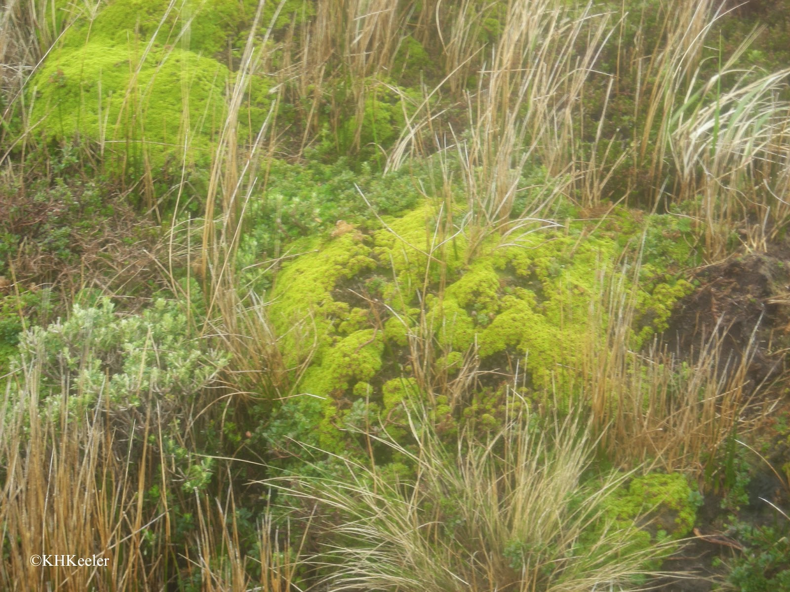grasses and cushion plants, Cape Horn