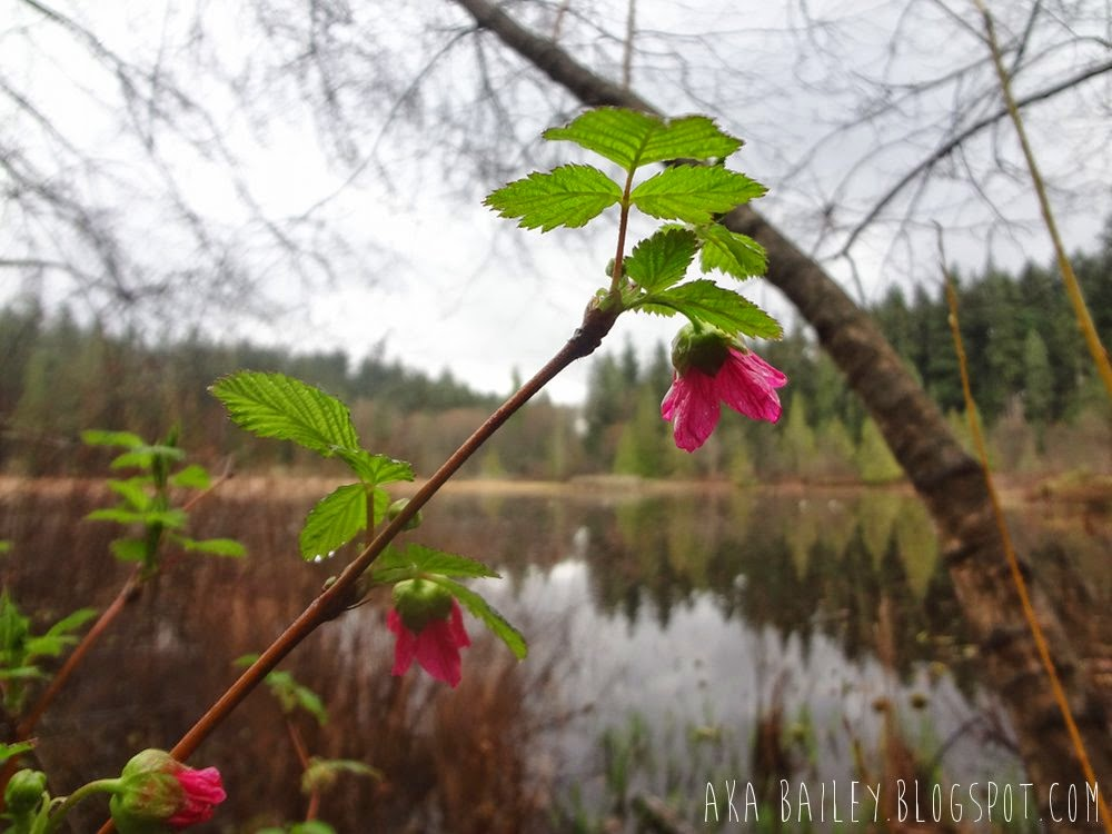 Flowers in front of Beaver Pond in Stanley Park in Vancouver