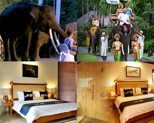 Elephant Safari Park Lodge Ubud Bali