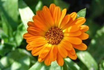 October's Flower