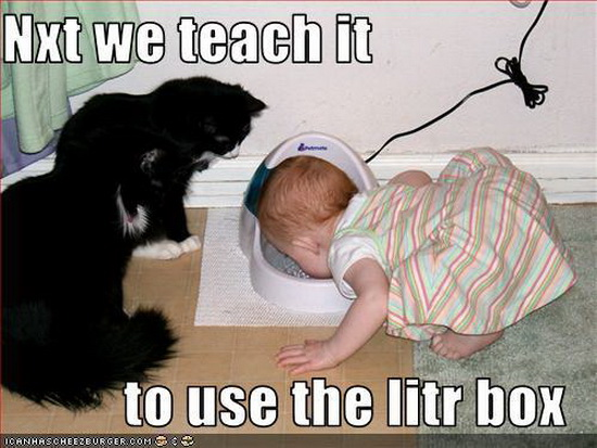 Funny Cats Pictures