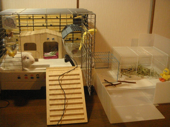 Cute Guinea Pig Cages Cute Guinea Pig Cage