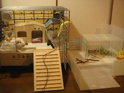 cute guinea pig cage