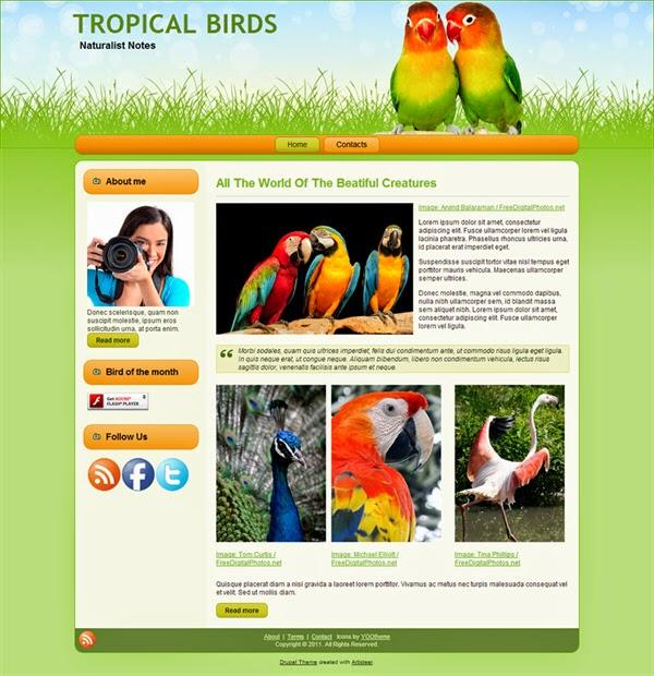 Tropical Birds - Free Drupal Theme