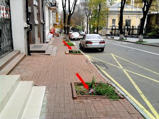 в Киеве погибают деревья