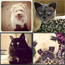 Lily, Phin, Luna, Winston