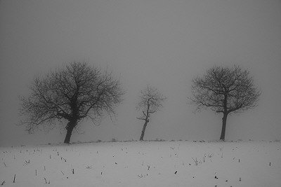 Photo with three trees in the mist and snow