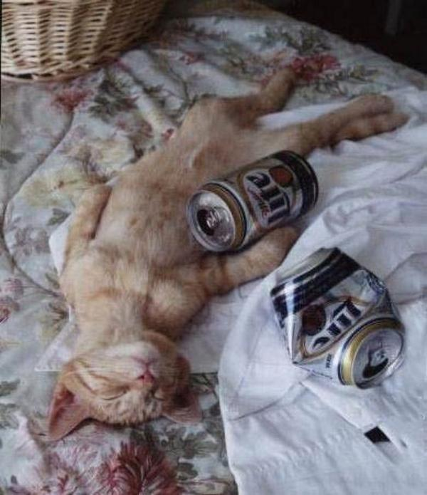 funny drunk pictures. Funny Drunk Animals