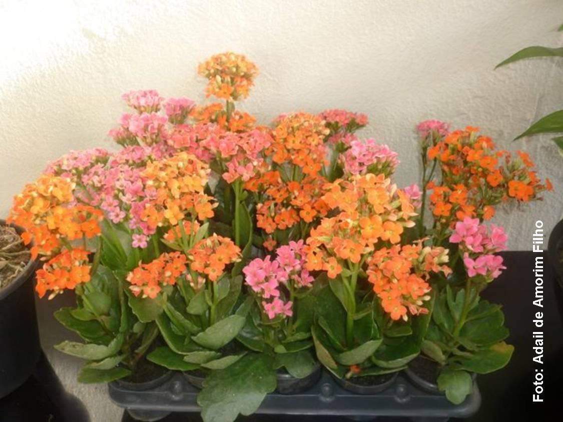 plantas que podem ser cultivadas em vasos Façanos uma visita