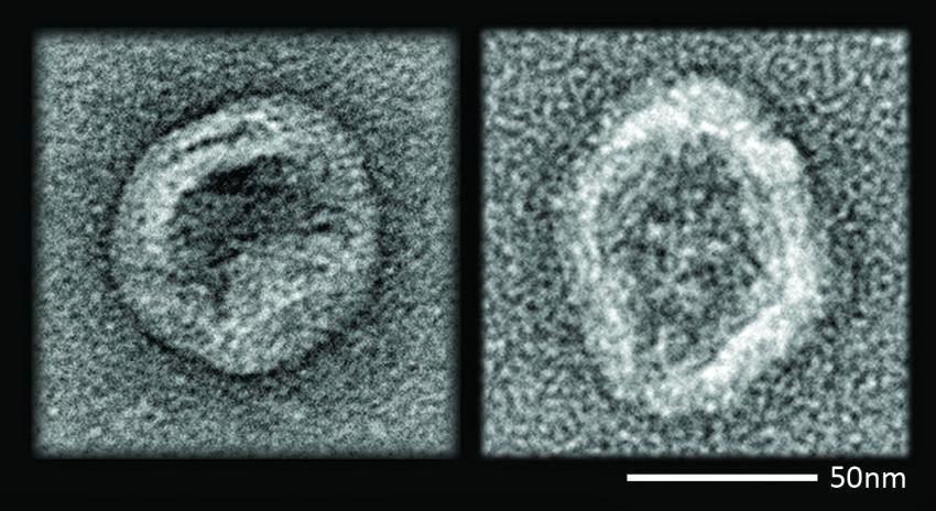 nanobot pest control