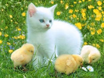 indahnya kasih sayang sesama makhluk