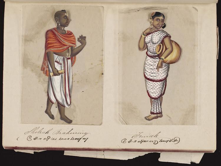 Sholeah brahminy and Female