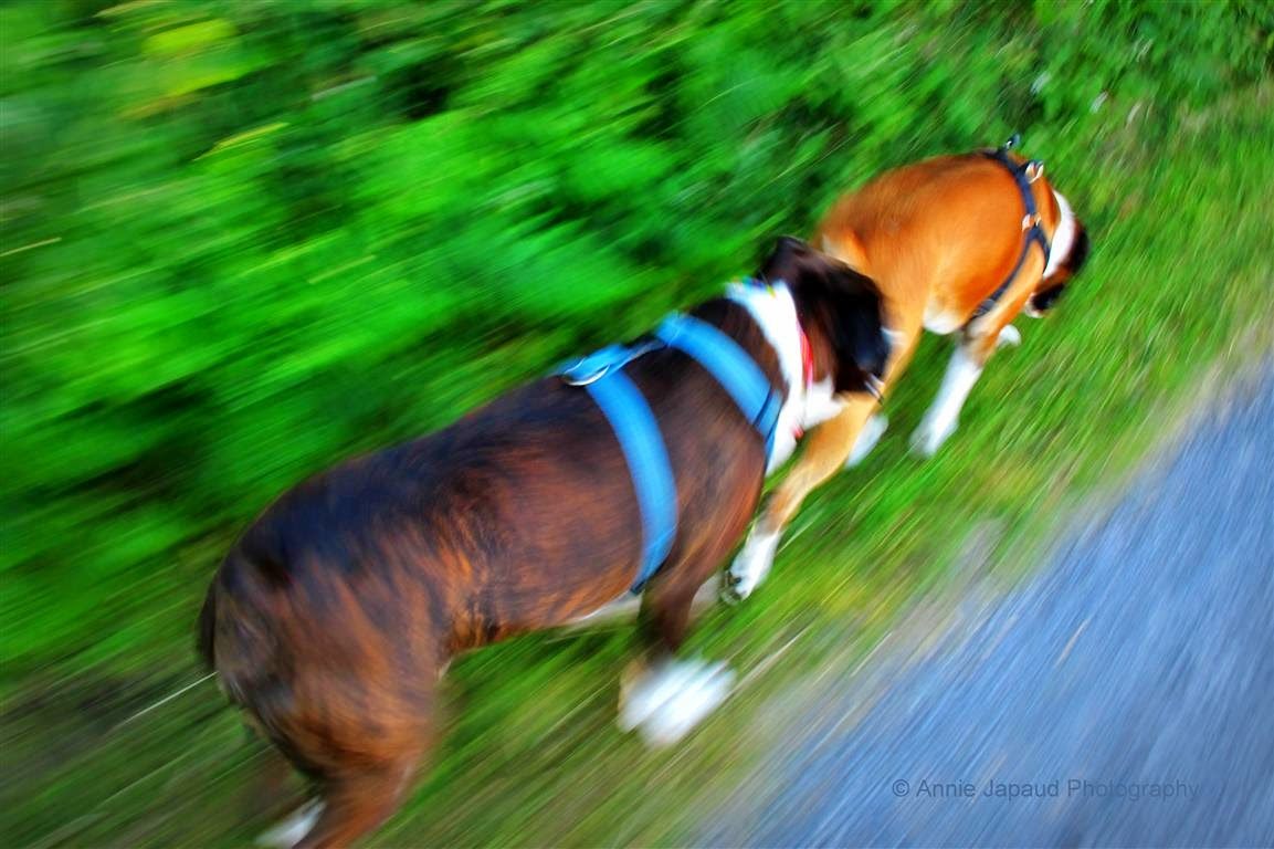 boxers running in motion