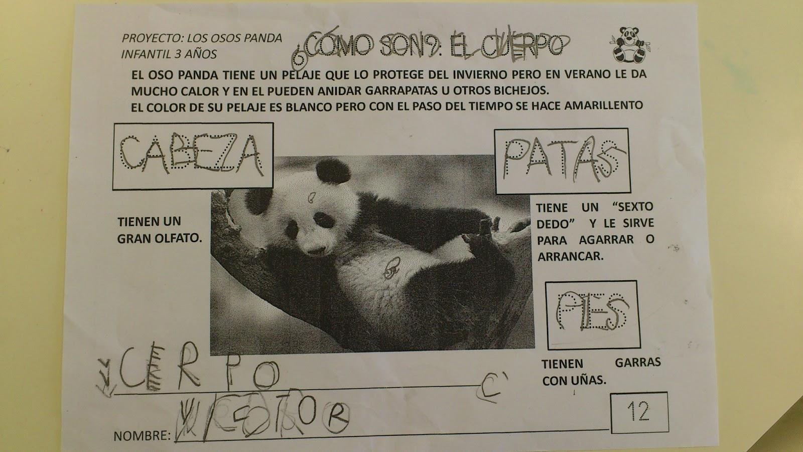 La clase de Laura: EL CUERPO DEL OSO PANDA, SUS PARTES MÁS IMPORTANTES