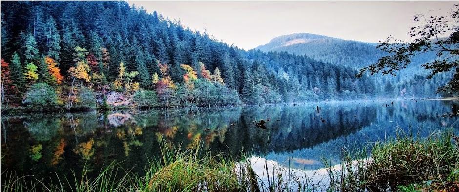 Carpathian Dream