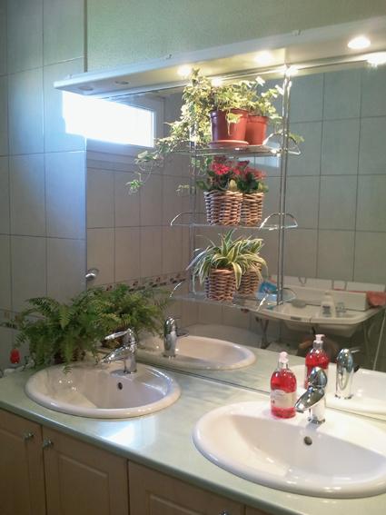 aujourd 39 hui j 39 ai mis des plantes dans ma salle de bain. Black Bedroom Furniture Sets. Home Design Ideas