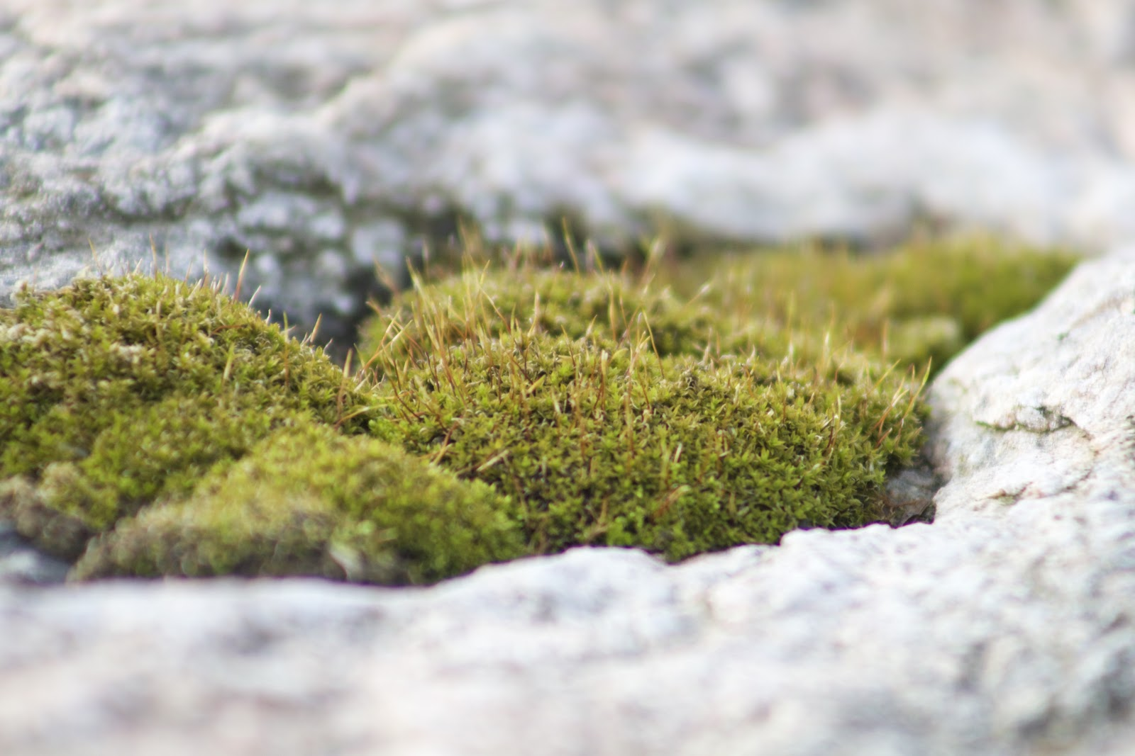 moss clump on rock