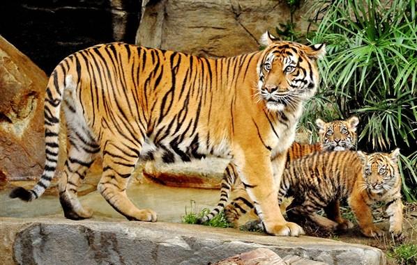 Animales en Peligro de Extinción: Animales en peligro de extinción