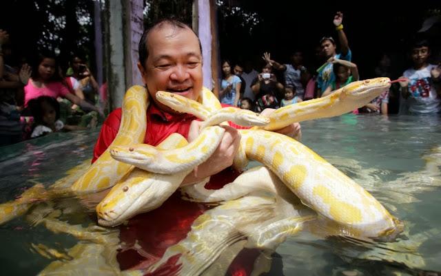 Homem dorme com cobras para celebrar ano novo chinês