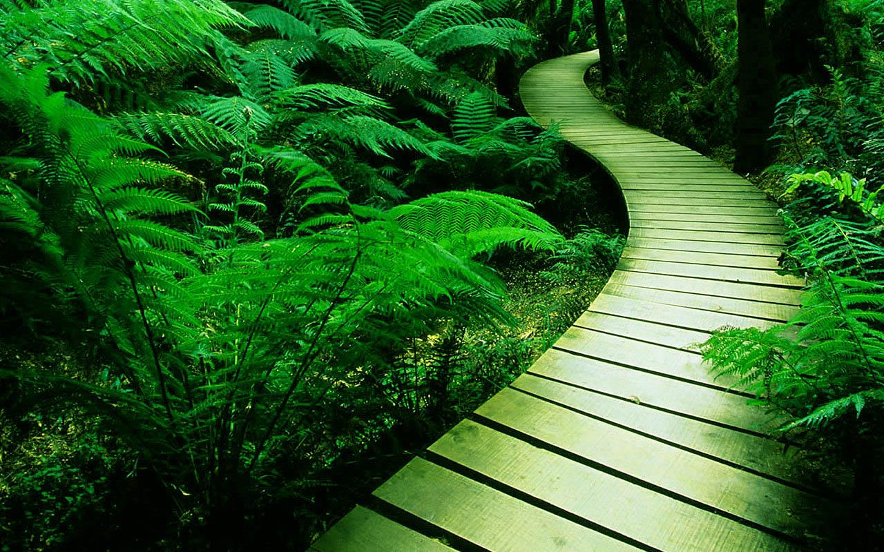 http://1.bp.blogspot.com/-fwHo1hmB_cA/ULH7zpzTsBI/AAAAAAAAAXo/Zhsmm6NlzTI/s1600/wallpaper_nature_08.jpg