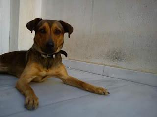 Ο σκυλακος  Ρουντι εχει χαθει εδω και 5 μερες απο Καματερο...Εθεάθη στη περιοχη της Πετρούπολης.