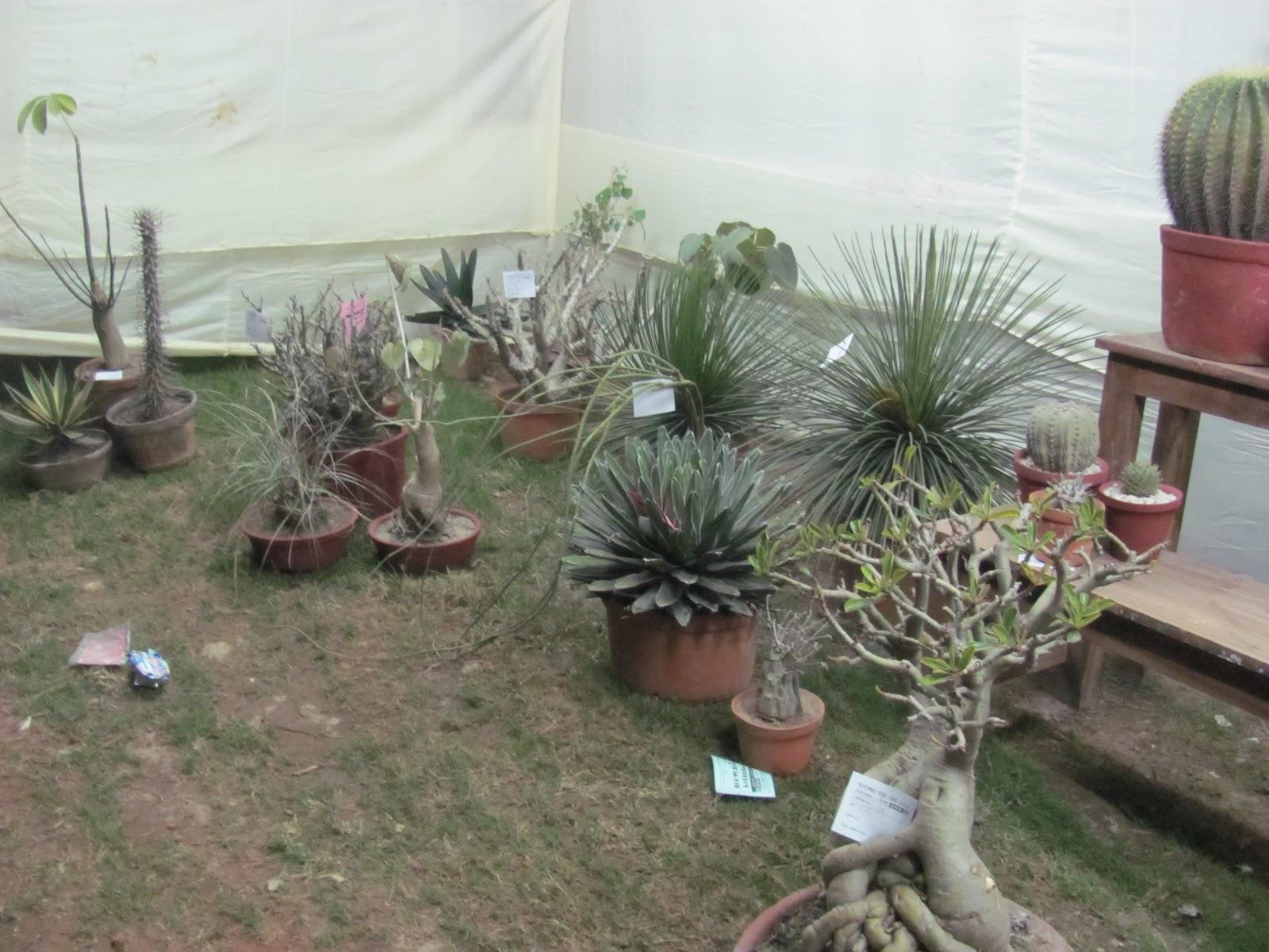 Own Cactus Green Fair At TarakeswarWB India