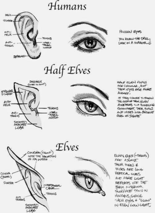 Human Half Elves Elves Eyes And Ears Art Drawing Tutorial Art