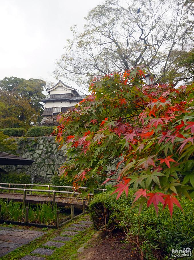 Momoji - Maizuru, Fukuoka