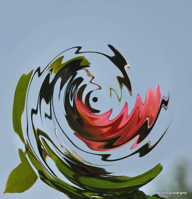Distorted Rose