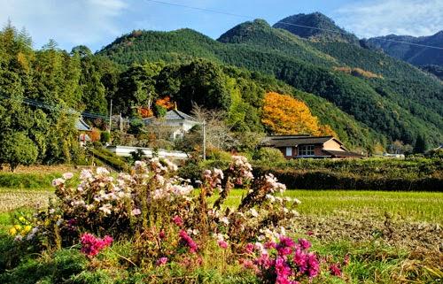 A Walk Around Kyushu Day 40 Urushidamachi to Taragi